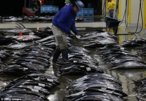 Study finds Fukushima radioactivity in tuna off Oregon, Washington